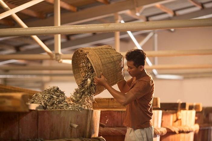 Đến thăm nhà thùng Phú Quốc - làng nghề nước mắm truyền thống trăm năm