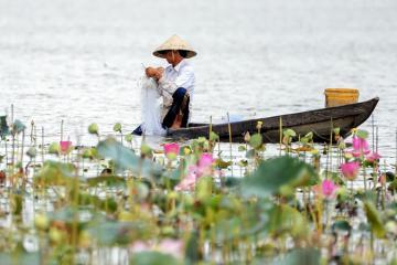 Có một Bãi Sậy - Sông Đầm đẹp bình dị độ cuối thuở Quảng Nam