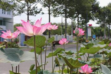 Du lịch Cao Lãnh, Đồng Tháp - khám phá thủ phủ đất sen hồng
