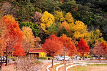 Đài Loan mùa thu - Những địa điểm ngắm lá phong lãng mạn