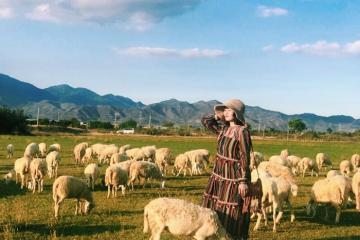 Khám phá đồng cừu An Hòa, Ninh Thuận theo dấu chân người du mục