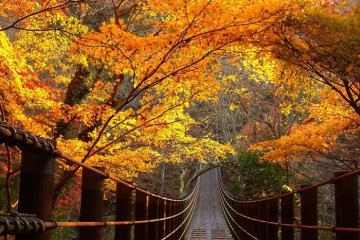 Du lịch Ibaraki, Nhật Bản tháng 10 - mê mẩn vẻ đẹp 'thiên đường mùa thu'