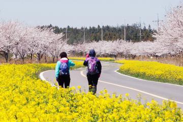 10 trải nghiệm nên thử khi du lịch đảo Jeju, Hàn Quốc