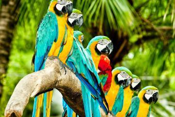 Vườn chim Jurong Singapore - Thế giới của các loài chim