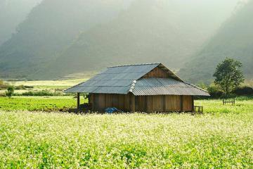 Du lịch Mộc Châu mùa hoa cải tháng mấy, địa điểm nào đẹp?