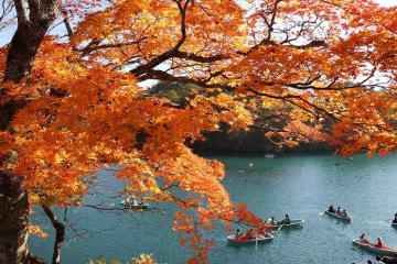 Rực rỡ sắc thu tại vùng Tohoku, Nhật Bản