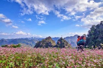 Ngắm hoa tam giác mạch tại Hà Giang