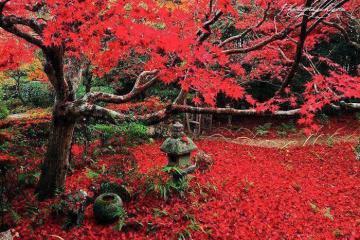 Ngắm lá đỏ mùa thu trên núi Arashiyama, Kyoto