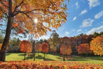 Travel Blogger Quỷ Cốc Tử chia sẻ kinh nghiệm chụp ảnh mùa thu đẹp lung linh bằng điện thoại