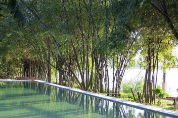 Rừng tre Triêm Tây - điểm du lịch sinh thái xanh mát bên sông Thu Bồn