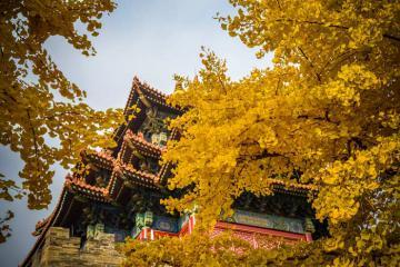 Mùa thu Thượng Hải quyến rũ du khách