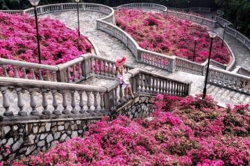 'Sống ảo' ở cầu thang hoa giấy đẹp mê ly giữa Singapore