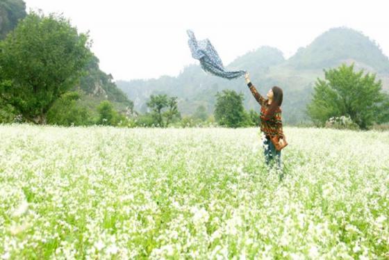 Đi đâu du lịch tháng 11 - Ngắm hoa tam giác mạch ở Hà Giang hay tắm nắng Phú Quốc?