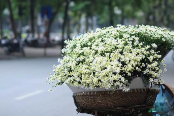 Tháng 11 về cùng những mùa hoa rực rỡ khắp ba miền