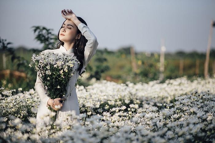 cúc họa mi Hà Nội