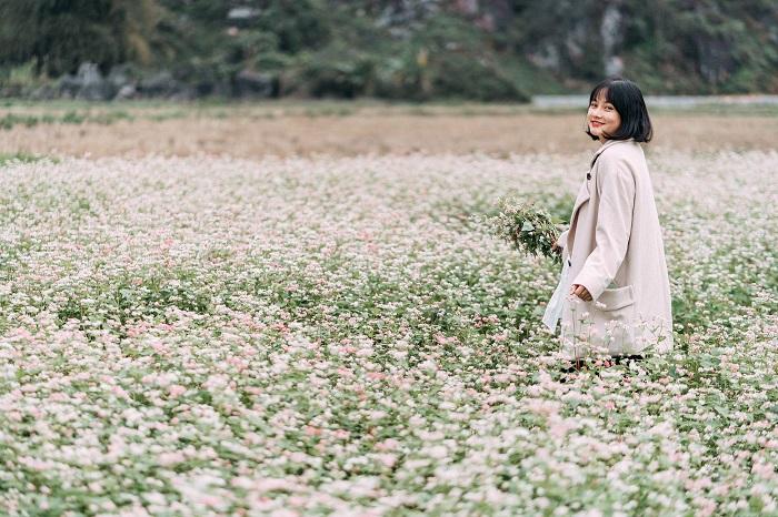 Hoa tam giác mạch tại Hà Giang