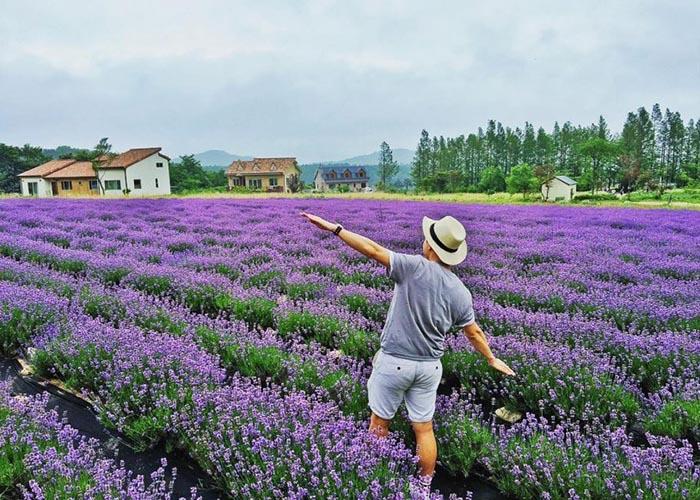 Đến khu du lịch Lavender ngắm nhìn khung cảnh ngập tràn sắc tím