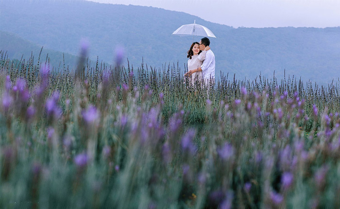 Những bông hoa tím đua nhau khoe sắc