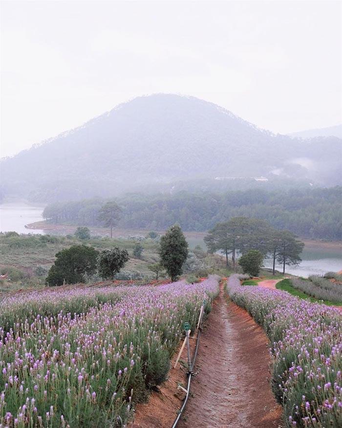 Luống hoa kéo dài xuống gần hồ nước trong xanh