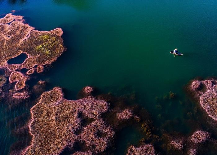 Hồ tảo hồng Bảo Lộc đẹp như tranh khiến dân mạng đứng ngồi không yên