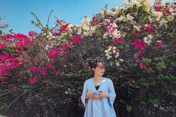 Xác định tọa độ 3 cung đường ngập tràn hoa giấy hồng rực góc trời Quy Nhơn
