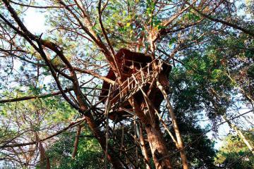 Homestay trên cây độc đáo trong khu nghỉ dưỡng Hana Land ở Đà Lạt