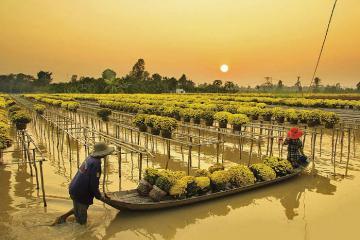 Mê ly ngắm nhìn làng hoa Sa Đéc đẹp nhất Nam Bộ