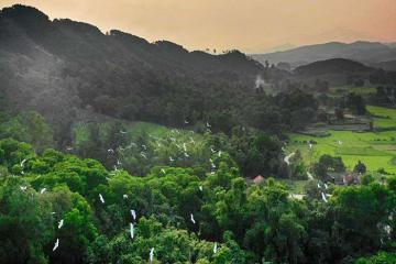 Về Quảng Ninh khám phá nét yên bình nơi rừng cò núi Hứa Đầm Hà