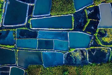 Du lịch Quảng Ngãi: Bạn có biết một rừng dừa nước tuyệt đẹp nằm ngay bờ biển Mỹ Khê?