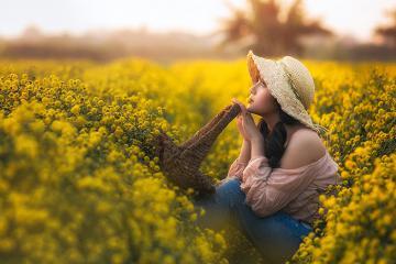 Say đắm vẻ đẹp vườn cúc chi vàng rực rỡ một góc trời Hưng Yên