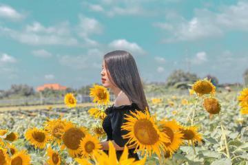 Thời điểm đẹp nhất để chinh phục khu vườn hoa hướng dương cực hot ở Bắc Giang