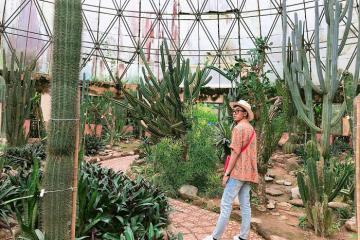 3 vườn xương rồng đẹp ở Việt Nam cho tín đồ yêu thiên nhiên