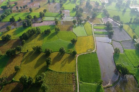 Du lịch An Giang ngắm nhìn cánh đồng lúa mới Tà Pạ xanh mướt