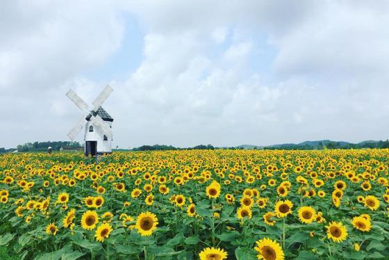 Phim trường Rose Garden - 'Hội An thu nhỏ' ở Bắc Giang