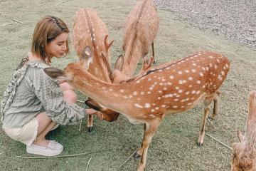 Du lịch Đài Loan tháng 12: Khám phá ngay xứ sở thần tiên Bambi Land