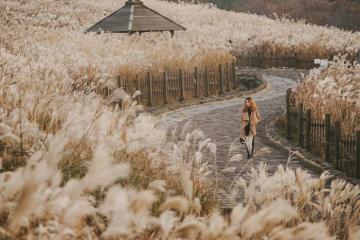 Rời xa phố thị náo nhiệt, khám phá đảo Jeju - 'thiên đường tình yêu' của Hàn Quốc